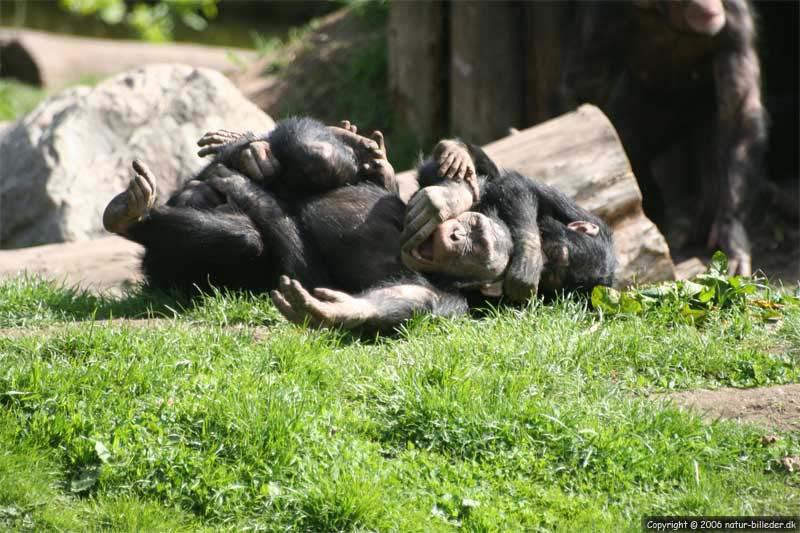 privat og diskret zoo rødovre